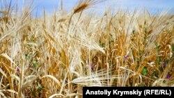 Проблемы аграриев запустили эффект домино
