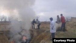 Сотрудники СЭС сжигают скелеты и туши ослов.
