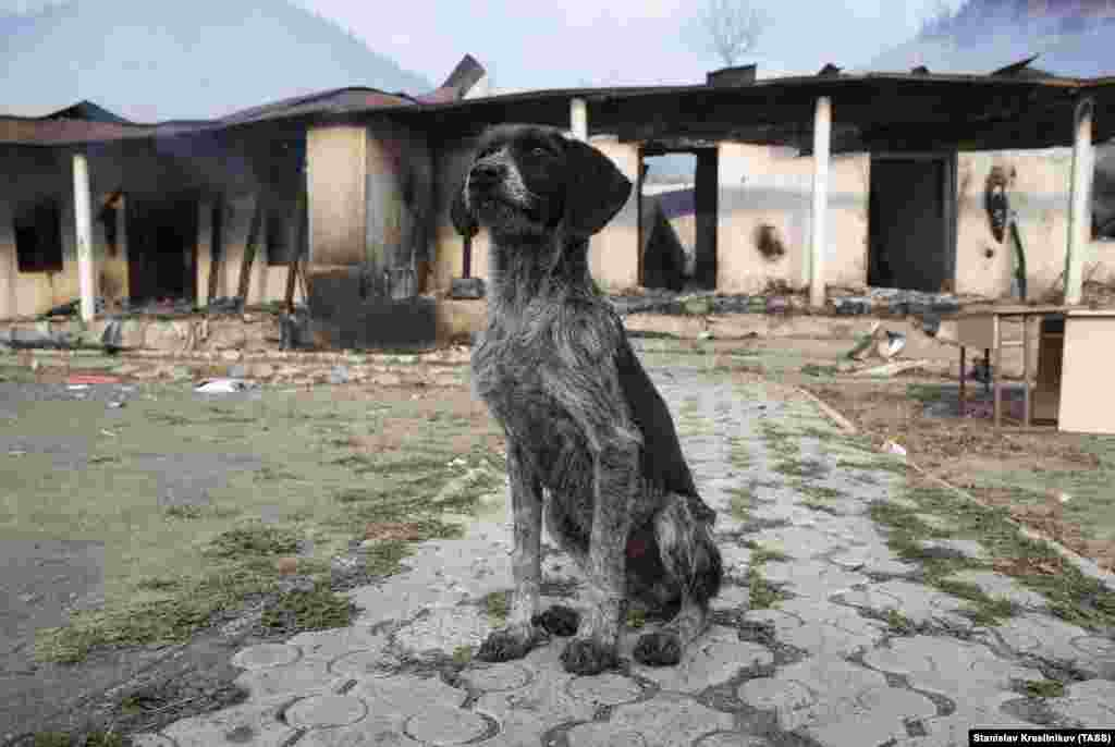 A dog in front of a burnt-out school building in Charektar/Caraktar.