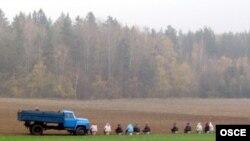 Сбор урожая добровольно-принудительно: студентов питерских вузов посылают на картошку