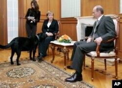 Собака Володимира Путіна забігла до зали, де проходила спільна прес-конференція з Анґелою Меркель. Сочі, 2007 рік