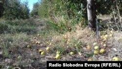 Преспански јаболка.