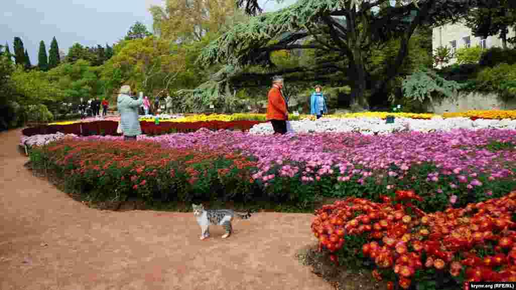 На «Балу хризантем» можно было встретить и котиков