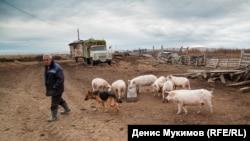 ферма Майнагашева