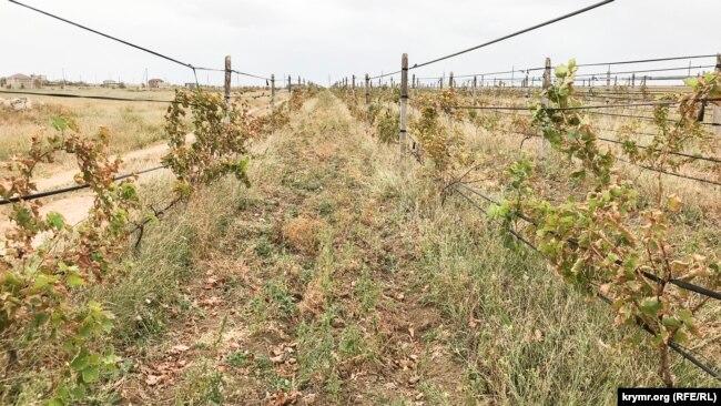 Виноградник, що постраждав внаслідок викиду хімічних речовин в Армянську