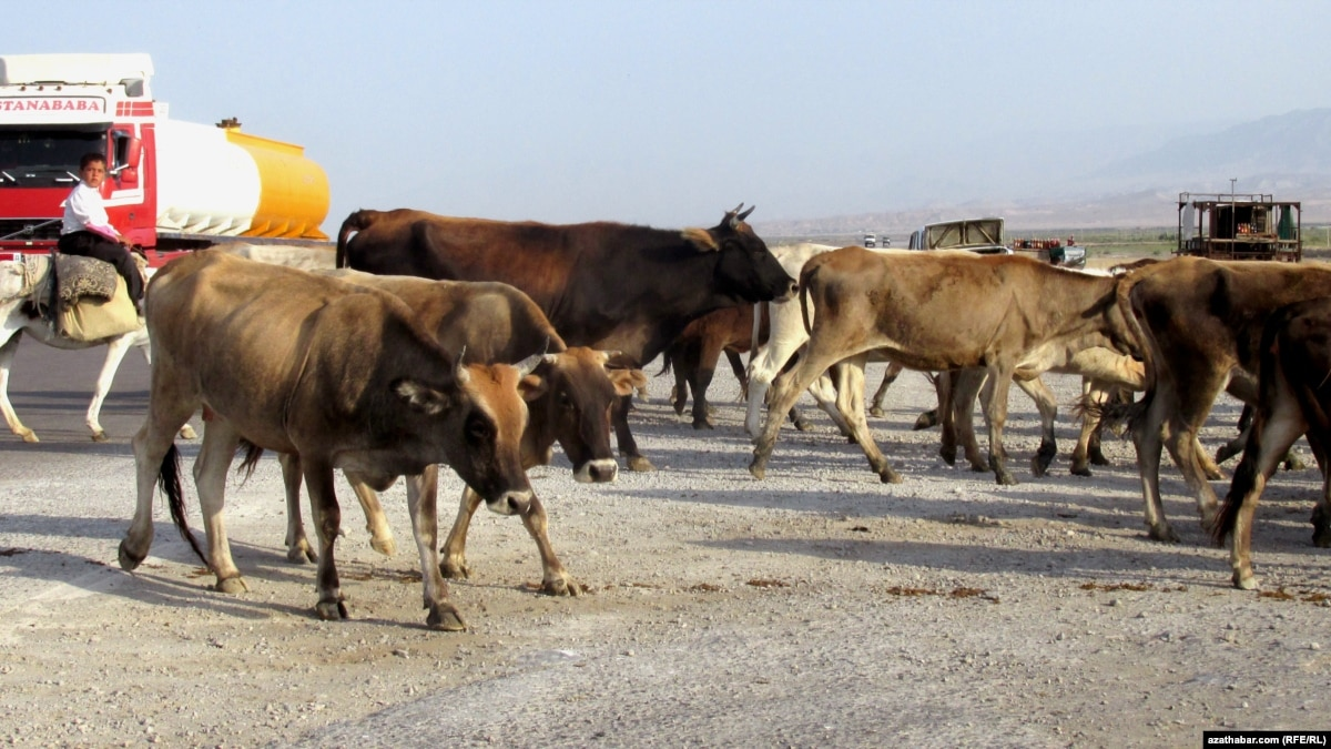 Analysis: Turkmenistan Jumps From Regional Pariah To Regional Health Risk With Home Remedies For Animal Diseases