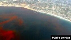 Красный прилив подходит к побережью Калифорнии