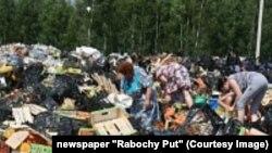 Люди ищут уцелевшие фрукты, подлежавших для уничтожения, в Смоленской области.