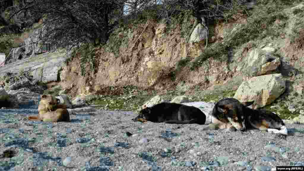 И пляжные собаки