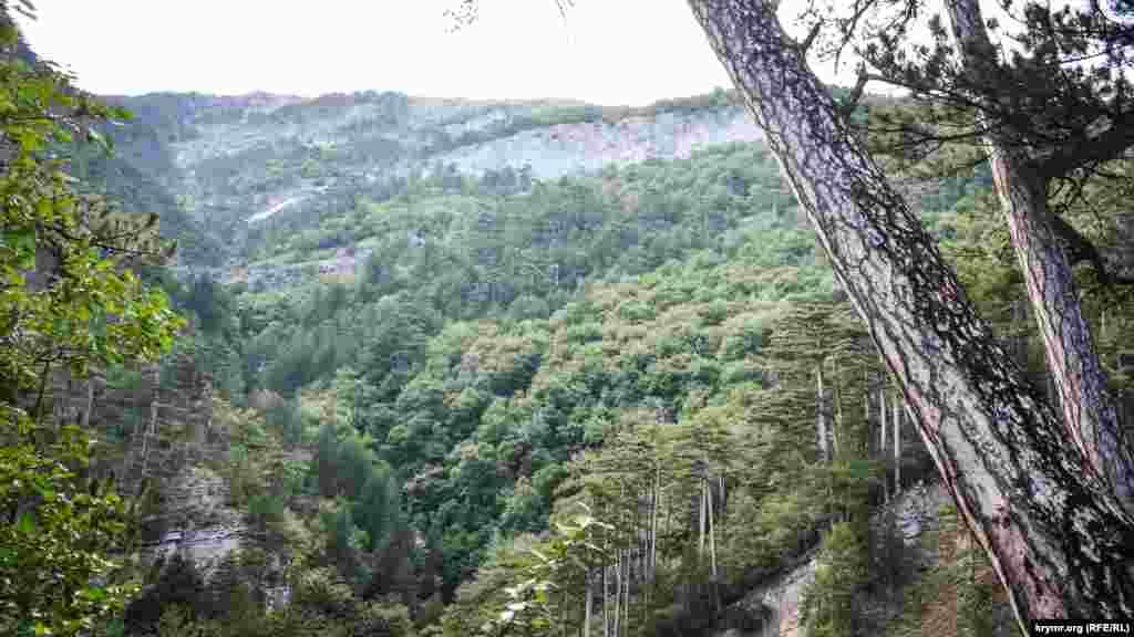 Ущелье Уч-Кош считается одним из самых длинных в Крыму – около пяти километров, высота скал достигает 100 метров