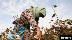 Tajikistan -- A woman harvests cotton in a field near the village of Yakhak, October 10, 2013