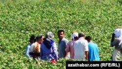 Жители Лебапской области на сборе хлопка, Туркменистана, 2013.