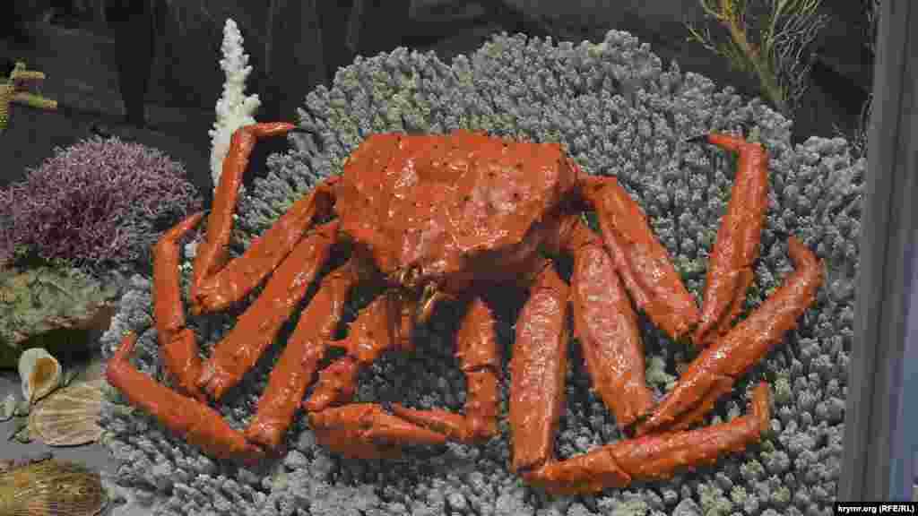 Камчатский краб является представителем вида раков-отшельников. В ХХ веке их начали разводить в Баренцевом море