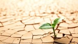 «Крымская Сахара»: как засуха уничтожает агробизнес полуострова | Радио Крым.Реалии