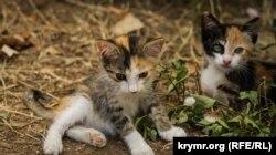 Уличные котята