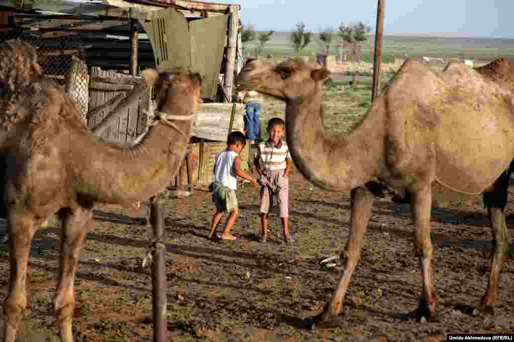 Bakytbek playing with his younger brother, near a shelter for the camels.
