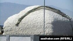 Türkmenistan 1 million tonna pagta hasylynyň ýygnalandygyny aýdýar