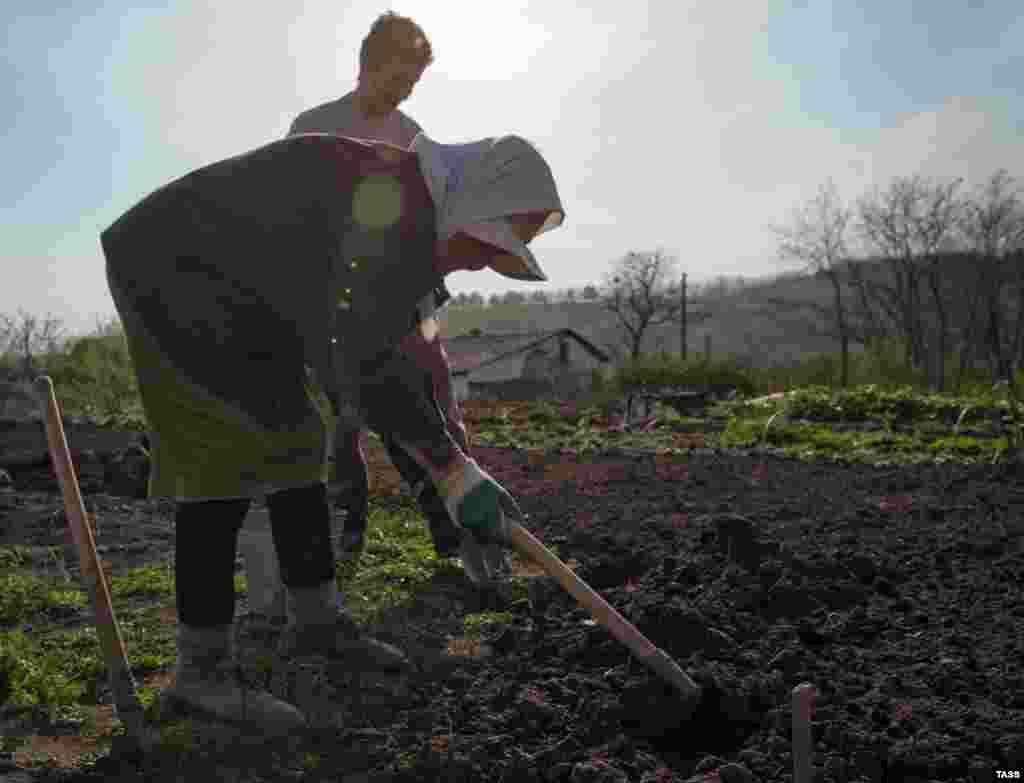 На огороде – и стар, и млад. Как проходят майские дни в Клиновке – в нашем фоторепортаже