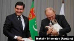 Бердымухамедов подарил Путину на день рождения щенка. Сочи, Россия. 11 октября 2017 года.