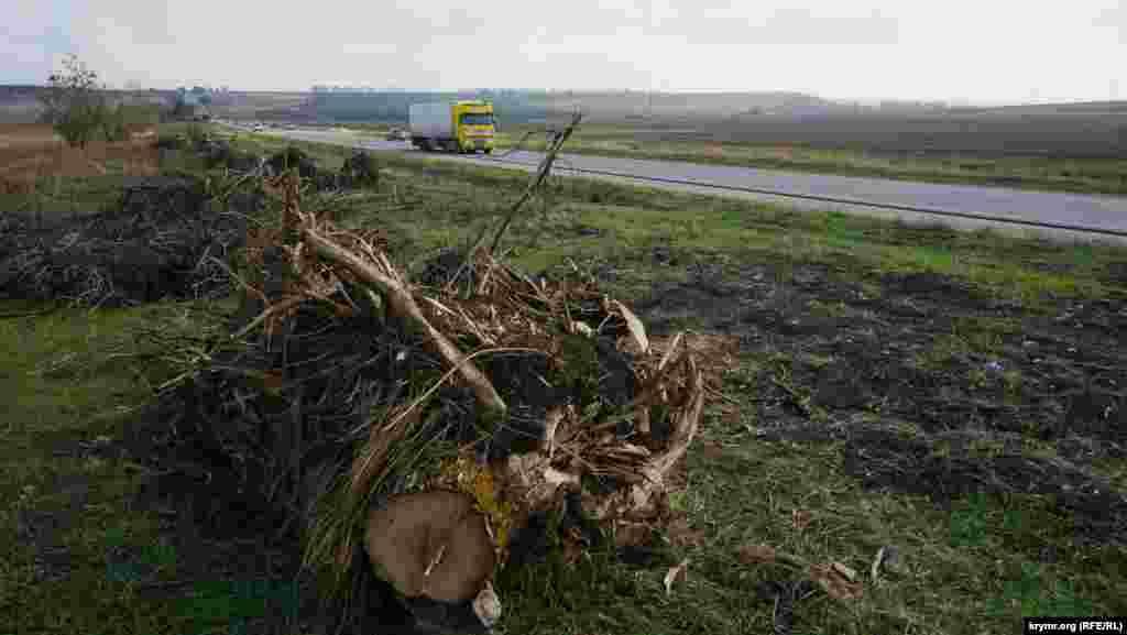 Почти все деревья вдоль трассы Симферополь-Белогорск отданы в жертву «Тавриде»