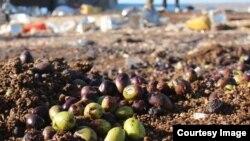 Оливки вместо боеприпасов – последствия российских авиаударов в сирийской провинции Идлиб
