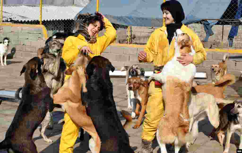 Volunteers play with dogs at the Vafa Animal Shelter in Hashtgerd, in Iran's Alborz Province. (epa/Abedin Taherkenareh)