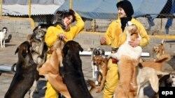 Volunteers play with dogs at the Vafa Animal Shelter in Hashtgerd, in Iran's Alborz Province. (epa/Abedin Taherkenareh)