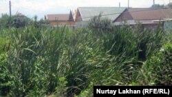 Дома недалеко от канала, где протекают канализационные воды. Село Коксай Алматинской области, 18 июля 2012 года.