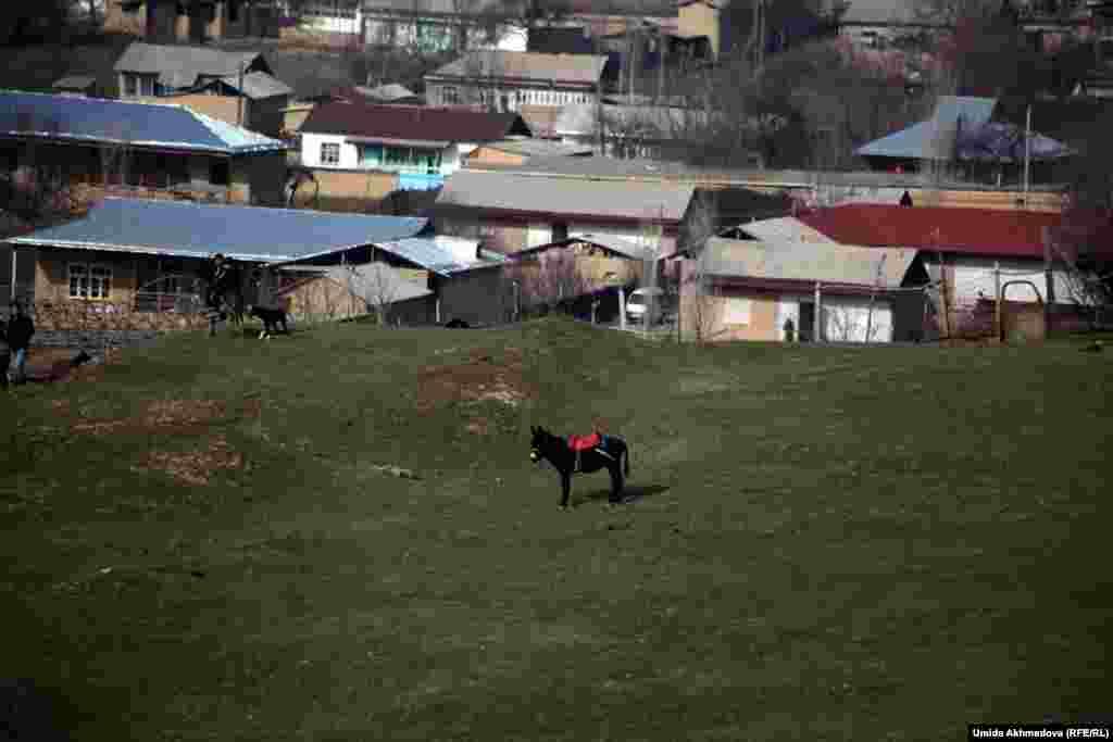 Ташкент маңындағы Сәмсерек ауылының көрінісі.