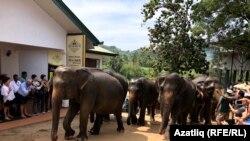 سریلانکا کې فیلان