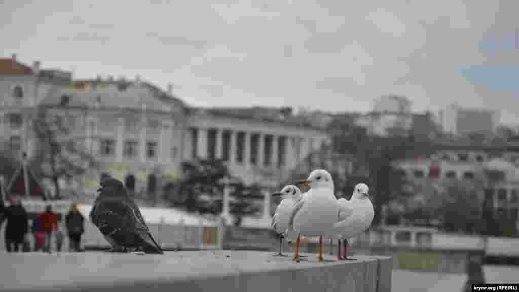 На набережной Корнилова голуби и чайки мирно уживаются друг с другом