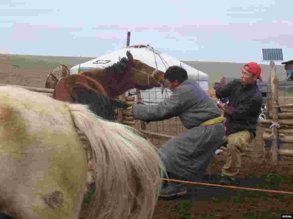 Men in Tsagaan Nuur try to rope one of the family's horses in preparation for branding. - The family scheduled the branding to coincide with an auspicious day on the Buddhist calendar, which can dictate the planning of everything from haircuts to weddings in Mongolia.
