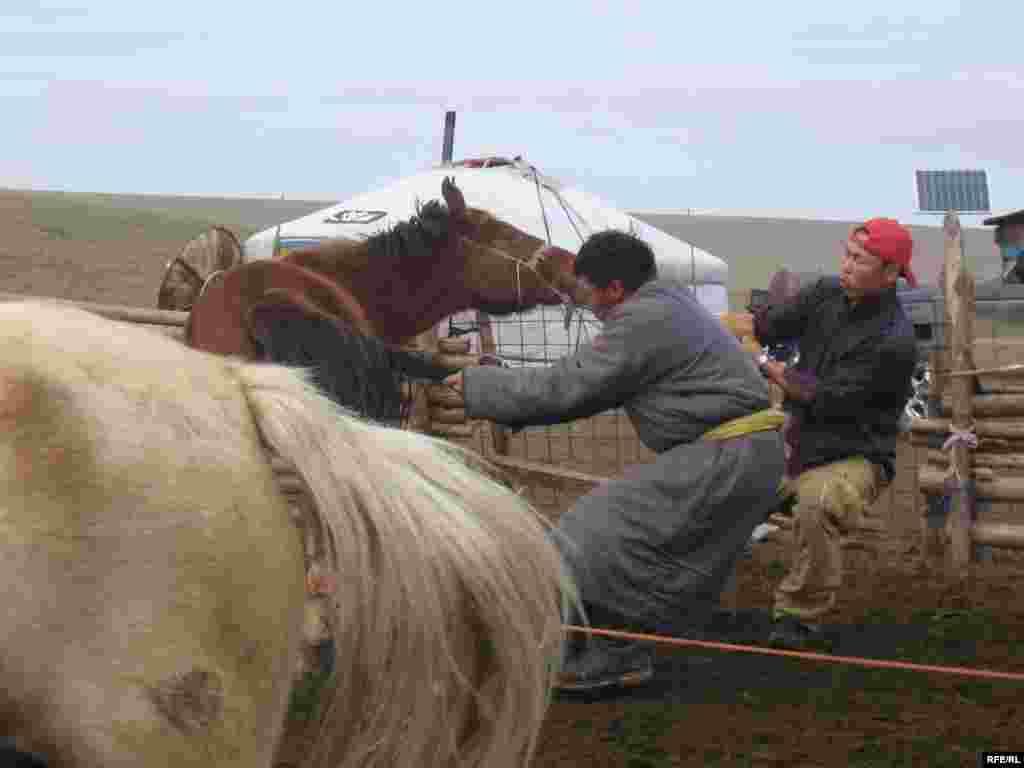 Ат тамгалаудан алып өйләнешүгә кадәр монголлар һәрнәрсәне Будда калкендаре карап эшли