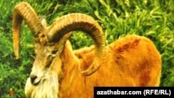 Туркменистан, масар