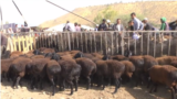 Tajikistan -- Sheep market in Varzob district, Sep2016