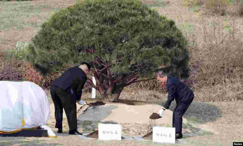И отправились сажать сосну. Главы двух государств посадили сосну, которая впервые проросла в 1953 году, когда Сеул и Пхеньян подписали соглашение о перемирии во время Корейской войны