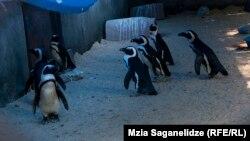 Пингвины не сильно пострадали от наводнения в зоопарке, июнь 2015 года