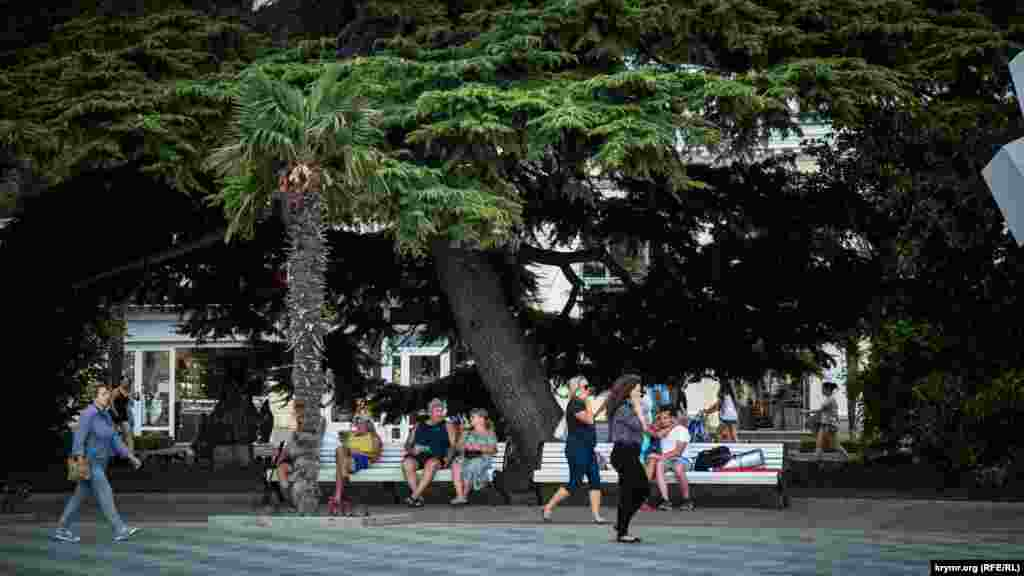 Пальма на городской набережной высажена на месте снесенного торгового комплекса «Еда». По словам российского экс-мэра Ялты Андрея Ростенко, все деревья, которые появились на набережной, подарили городу предприниматели