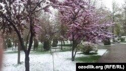 7 апрель куни Тошкентда қалин қор ёққан эди.