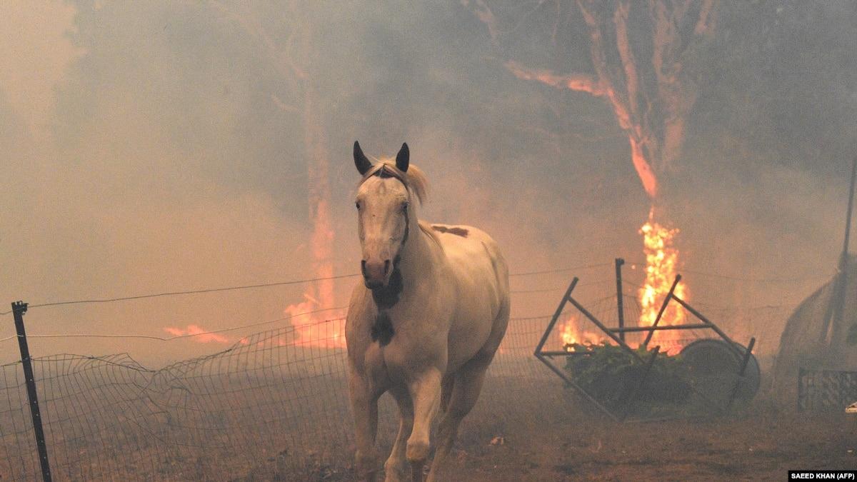 Австралия в огне. Погибло более миллиарда животных