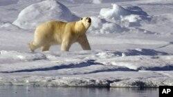 Товща льоду в Арктиці потроху перетворюється на поклади токсичних речовин
