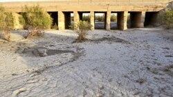 یک خانه، یک زمین ۱۲۱؛ تلاش برای نجات تالابهای ایران و سرشماری حیاتوحش