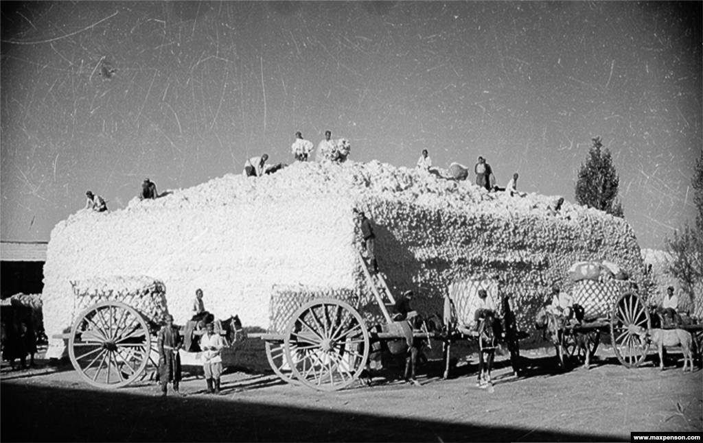 A stockpile of newly picked cotton.
