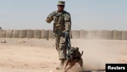 Një ushtar amerikan me një qen për zbulim të bombave në zona lufte.