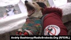 Під Кабміном протестують проти знищення безпритульних тварин