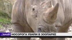 Редкого белого носорога убили в зоопарке