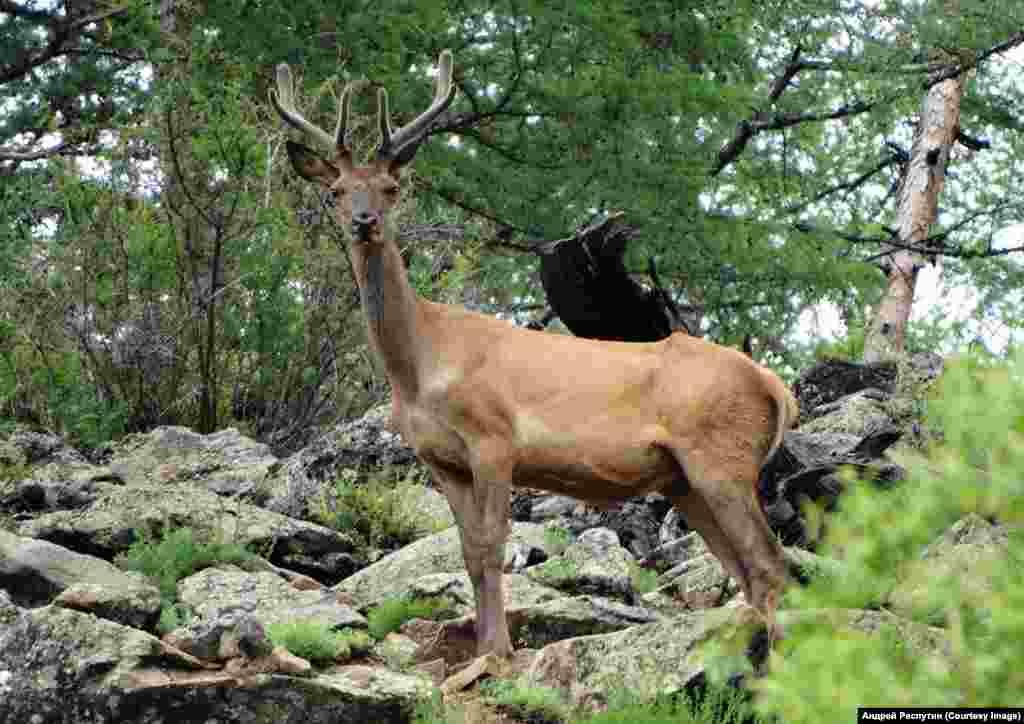Wildlife Photos Siberia