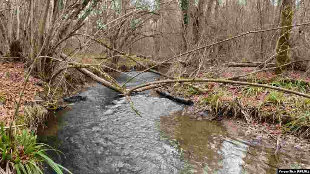 Річка Чорна на виході з Чорноріченського водосховища