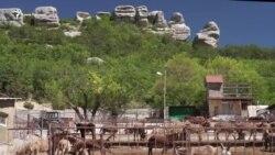 Один день на ослиной ферме под Бахчисараем (видео)