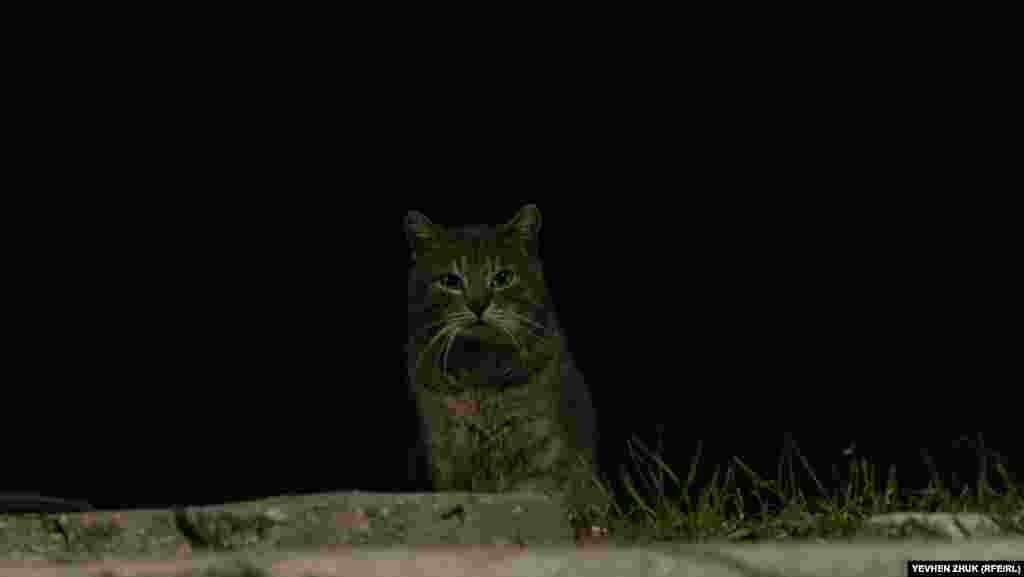 Кот глядит из тьмы